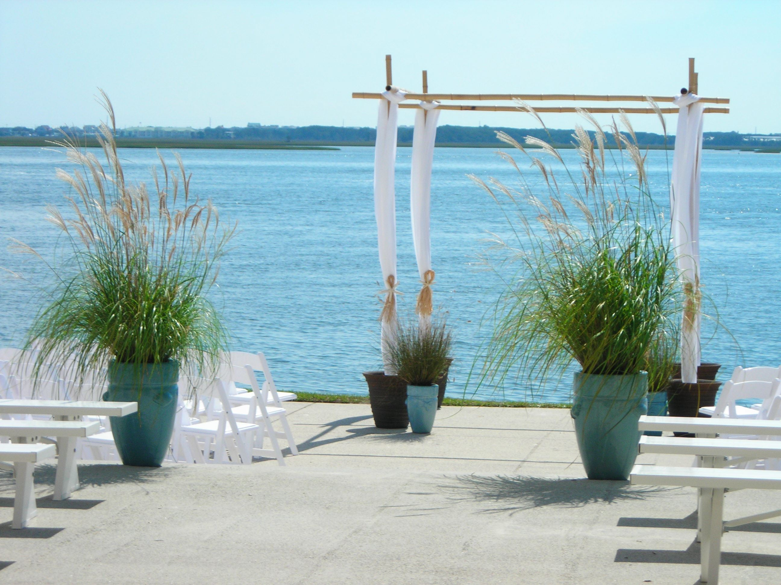 pampus grass patio