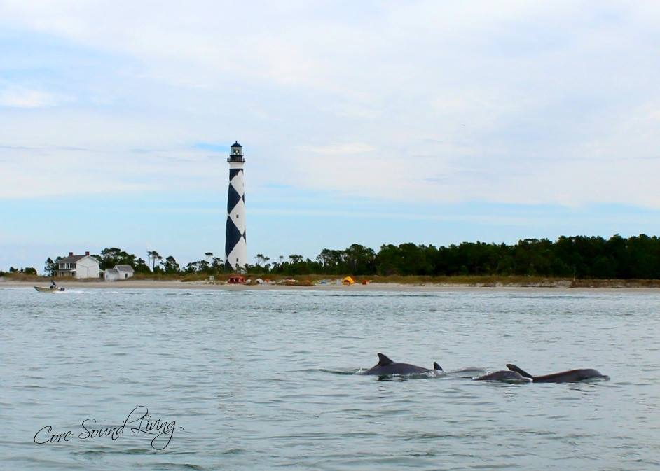 Lighthouse Dolphins